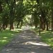 Громадськість взялася за розгляд документації по ремонту парку ім. Коцюбинського в Чернігові